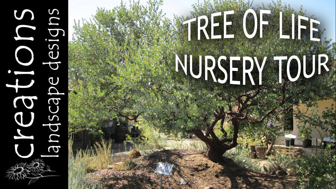 Tour Of Tree Life California Native Plant Nursery In San Jaun