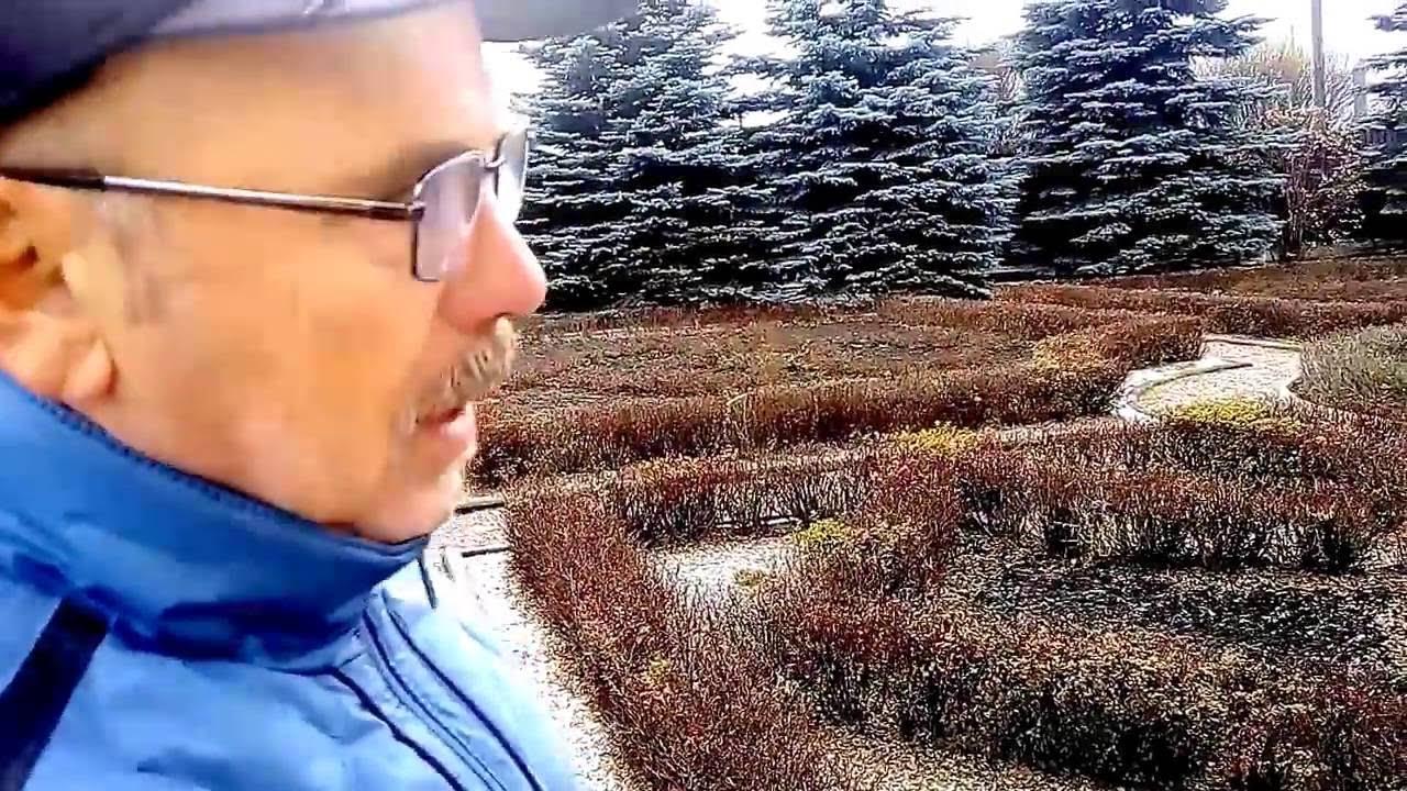 Как сохранить формованный сад зимой Николай Дементьев