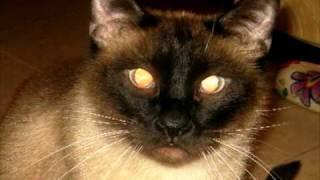 A#3 (У.эР.А.) Кошачье счастье.avi