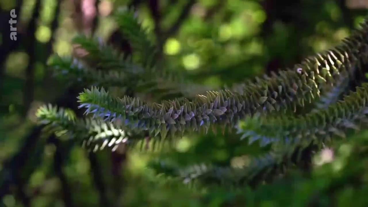 Visites Guides Estivales Des Jardins De La Saline Royale