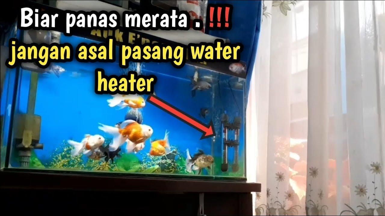 Biar Panas Merata Cara Pemasangan Heater Aquarium Yang Benar Youtube