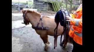 Optuigen van het menpaard