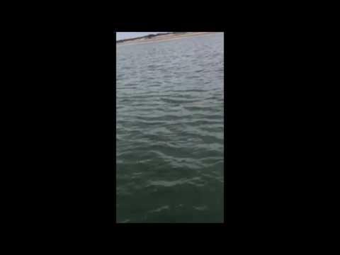 Shark Off Plum Island Mass