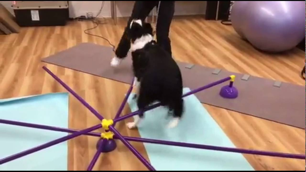 The TOTO FIT LLC Spider! - YouTube