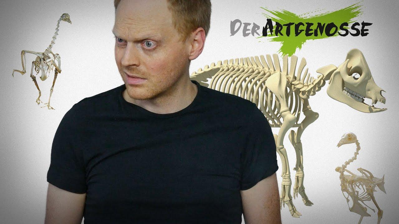 hey veganer wenn wir tiere nicht essen sterben sie aus youtube. Black Bedroom Furniture Sets. Home Design Ideas