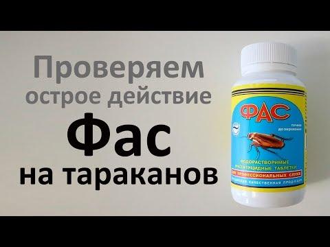 Как таблетки  Фас убивают рыжих тараканов