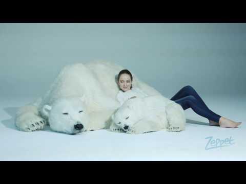 Animals As Art / Polar Bear