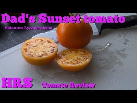 ⟹ Dad's Sunset Tomato, Solanum lycopersicum, Tomato Review 2018