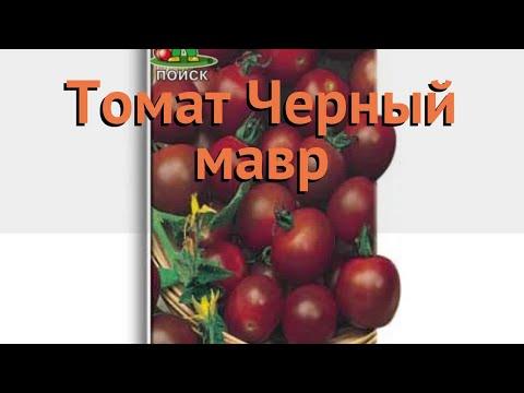 Томат обыкновенный Черный мавр (chernyy mavr) 🌿 обзор: как сажать, семена томата Черный мавр