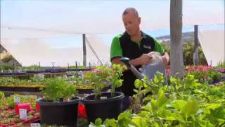 Greenfingers - Creating Attractive Herb Planters