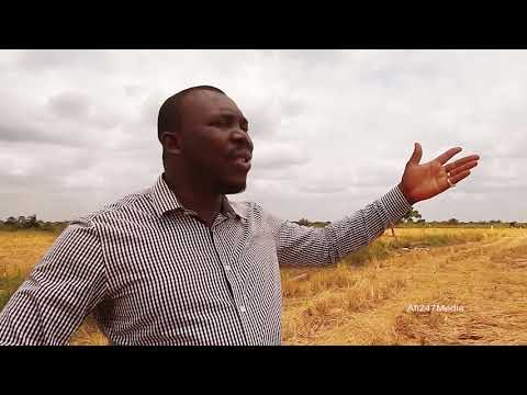 SCAT Agro Ghana Limited & Social Enterprise Advocate - Rice Farming in Akatsi documentary.