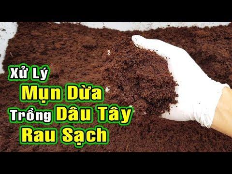 Cách Xử Lý Xơ Dừa, Mụn Dừa để Trồng Dâu Tây Và Rau Sạch   How To Make Coco Peat, Coir Compost