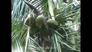 Les Antilles découverte des paysages paradisiaques de Martinique ( l