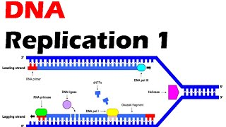 This dna replication lecture explains the process in prokaryotes with enzymes involved replication. for more info log on to- http://ww...