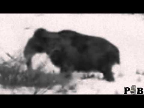 Breakdown - REAL Woolly Mammoth Sighting