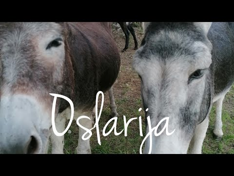 Hidden Paradise for Donkeys - Oslarija, an institute for breeding and researching donkeys