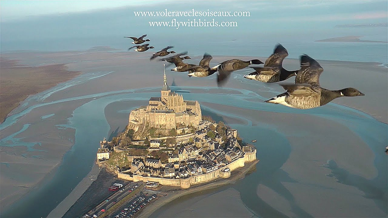 AMAZING flights with birds on board of a microlight