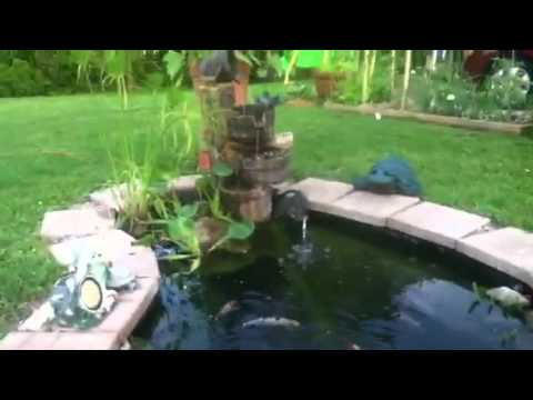 Feeding time koi and bluegill in garden pond youtube for Sunfish in a backyard pond