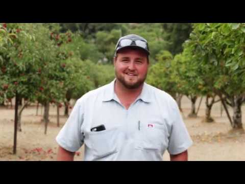 Apple Growers from Sonoma County, CA | Mike Meyer Jr.