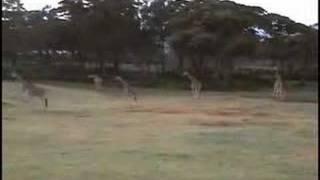 Incident at Giraffe Manor