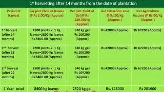 ALOE-VERA PLANTATION PROJECT