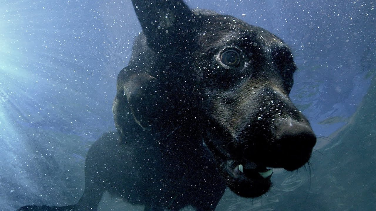 Underwater dogs - Pets - Wild at Heart: Episode 1 Preview - BBC One ...