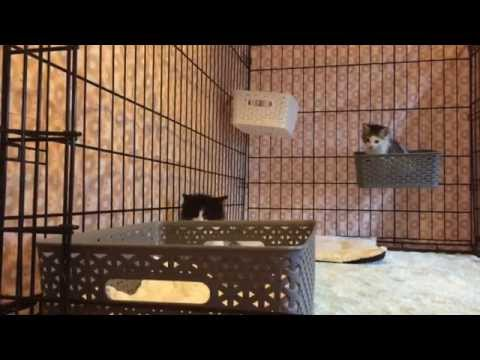 More Kitten Antics