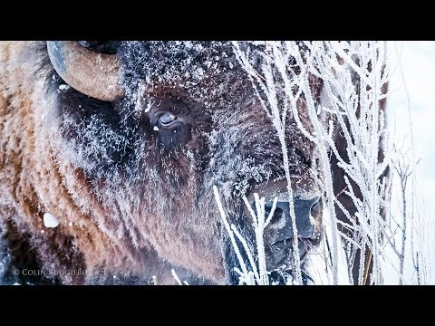 Chasing Light -  Bits: Yellowstone Winter I