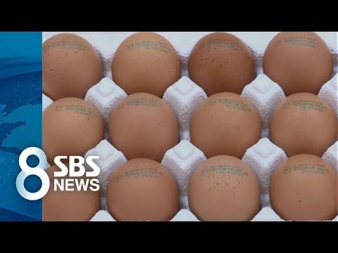 달걀 '포장 날짜' 대신 '산란 날짜'…양계농가 거센 반발 / SBS