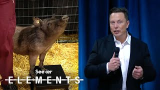 Elon Musk Just Showed Off How Neuralink's Implant Works...in a Pig