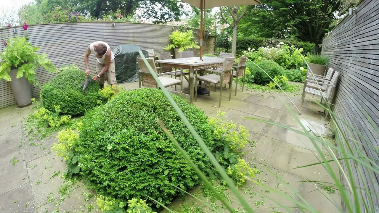 Buchsbaum Schneiden Mit Egrola Kugelschnitt-schablonen Topiary Short Version Annual Shaping Of Buxus Sempervirens Box Notting Hill Gworld Joe 02 51 Hd