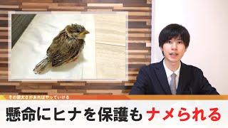 助けた小鳥にナメられる、懸命の保護活動虚しく【どうでもいい日常のニュース】