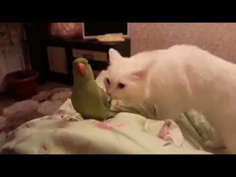 первое знакомство с попугаем