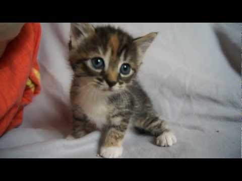 cute-baby-kitten-meows-because-mama-cat-is-not-there