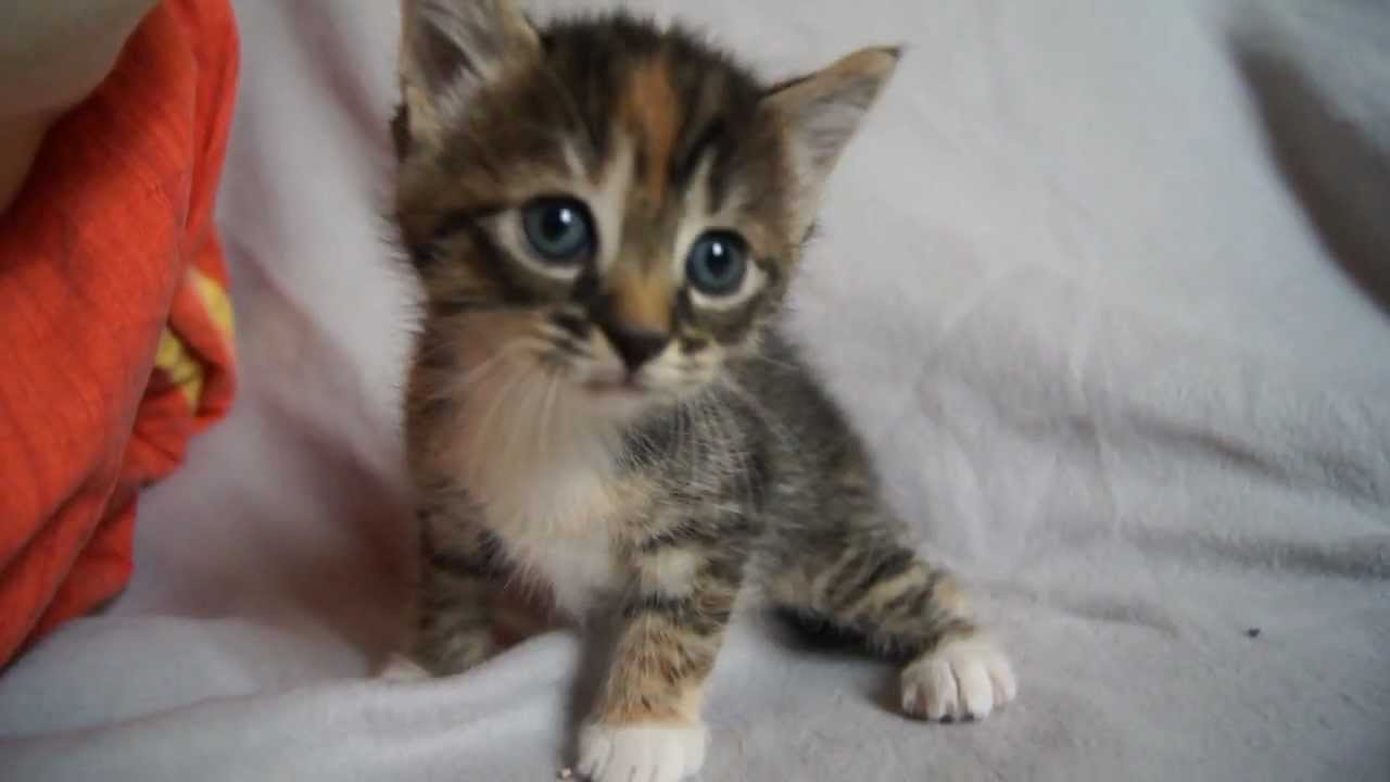 20  Best Of Cute Baby Kittens