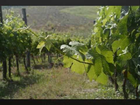 WINE TOUR VILLA PETRIOLO grape harvest wine tasting cooking class