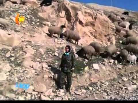Kurdistan tv dilop.  Sara Doski