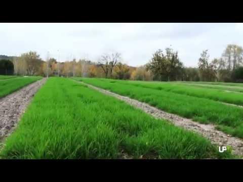 Noticias Destacadas: Cluster Agri-Food [2014-05-16] -- UPV