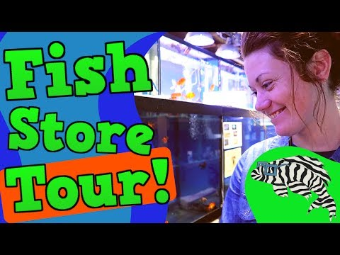 Awesome Fish Store Tour! Gerber's Tropical Fish, Part 1 - Freshwater