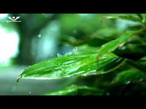 world-best-islamic-song-allahu-allah-||-best-islamic-song-2017