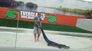 Everglades Holiday Park Florida Alligators and Gator Boys Paul