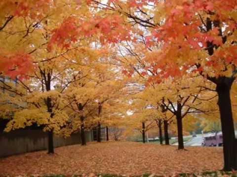 Yıldırım Gürses her sonbahar gelişinde