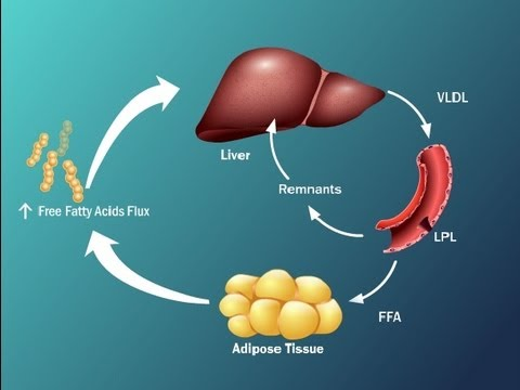 Fatty Acids and Disease in Type 2 Diabetes