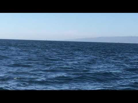 Beautiful dolphins 09/24/2017