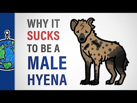 Why It Sucks to Be a Male Hyena