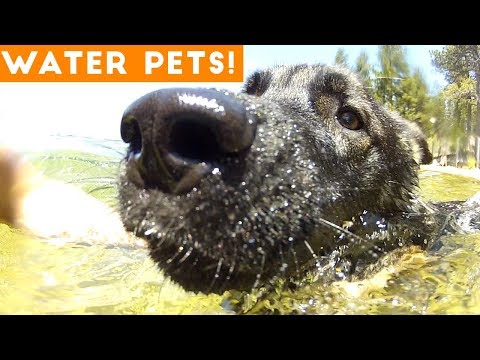 The Best Pet & Animal WATER FAILS & BLOOPERS of 2018 Weekly Compilation | Funny Pet Videos