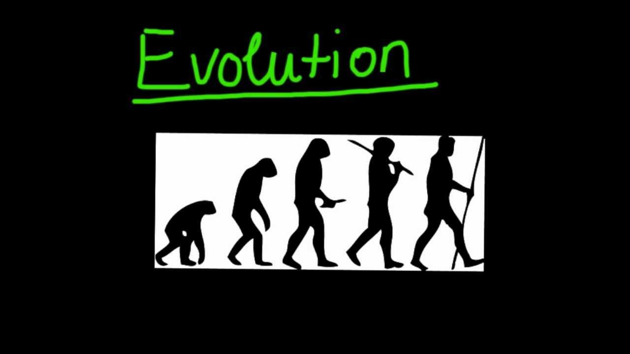 Einführung in die Evolution und die natürliche Selektion - Biologie ...