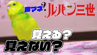 【関西弁インコ】出来る限りのルパン声をインコにひたすらブチ込んでみた結果【ずーやん】