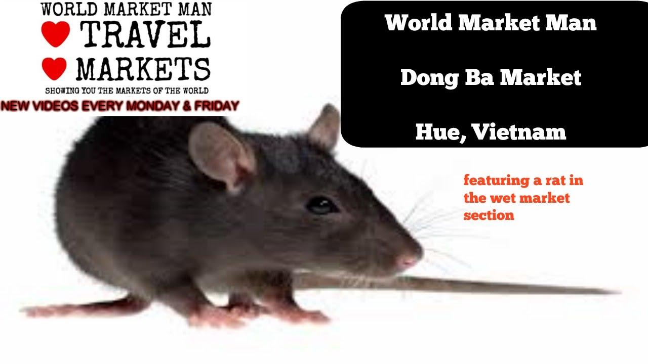 Dong Ba Market, Hue, Vietnam featuring a big rat