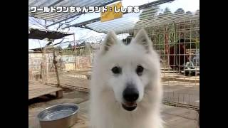 千葉県にあるワールドワンちゃんランドの紹介です。 http://kanto.me/kb...